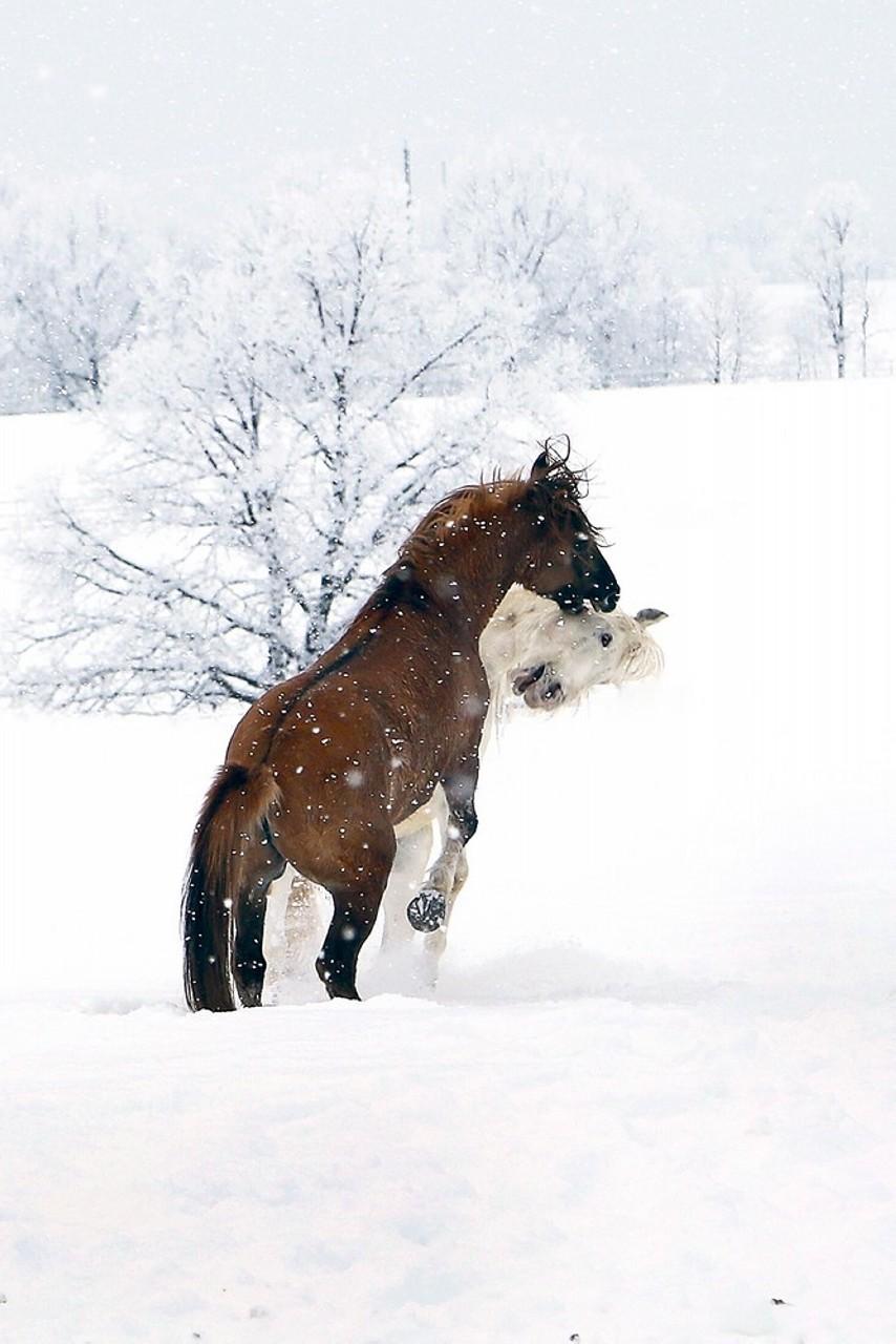 Фотографии Рамиля Кильмаматова