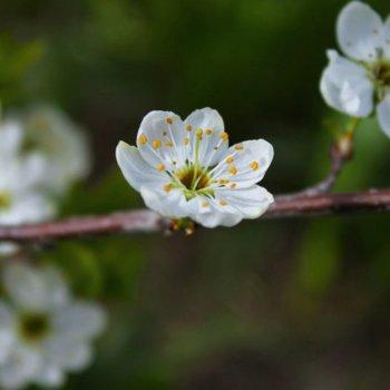 «Весна пришла», Диана Хажина