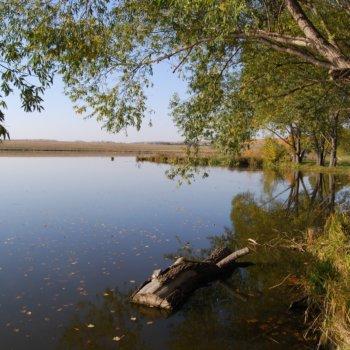 «Июльское утро на пруду», Раиль Мусин