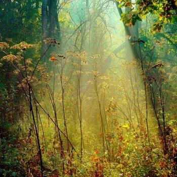 «Тёплое осеннее утро», Юрий Пичугин