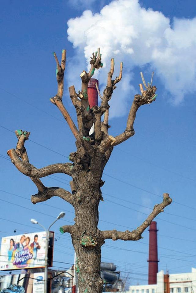 «Дерево жизни», Насих Халисов, 2009